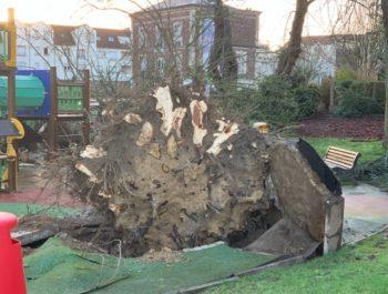 Square Foucher de Careil - arbre déraciné